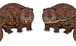 Beaver Earrings