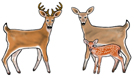 White Tailed Deer Earrings